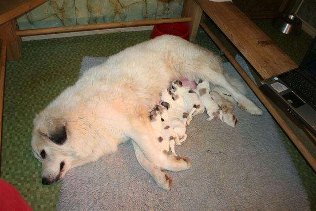 Anna en haar baby's