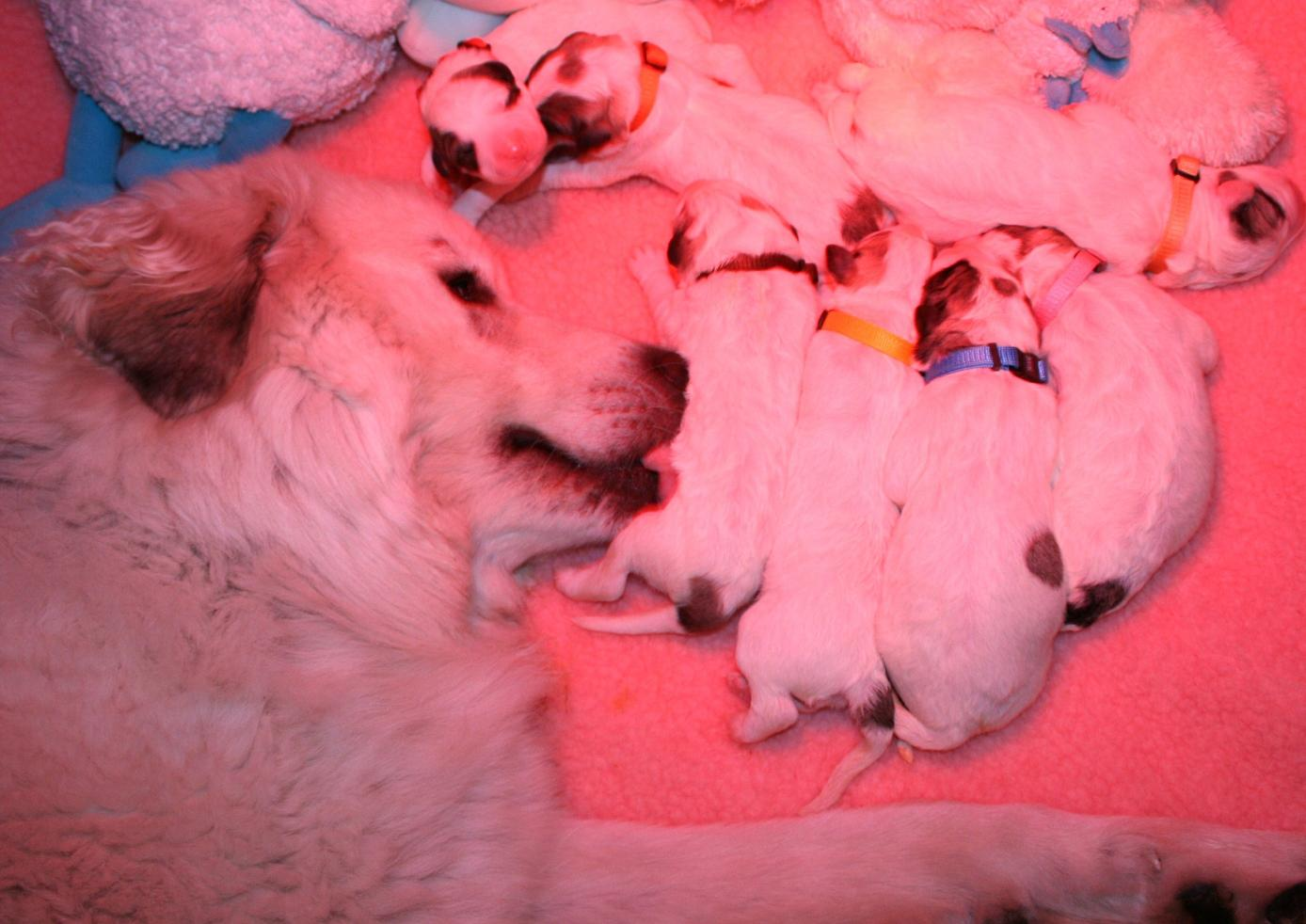 Proud Mammy keeps her babies cleeen