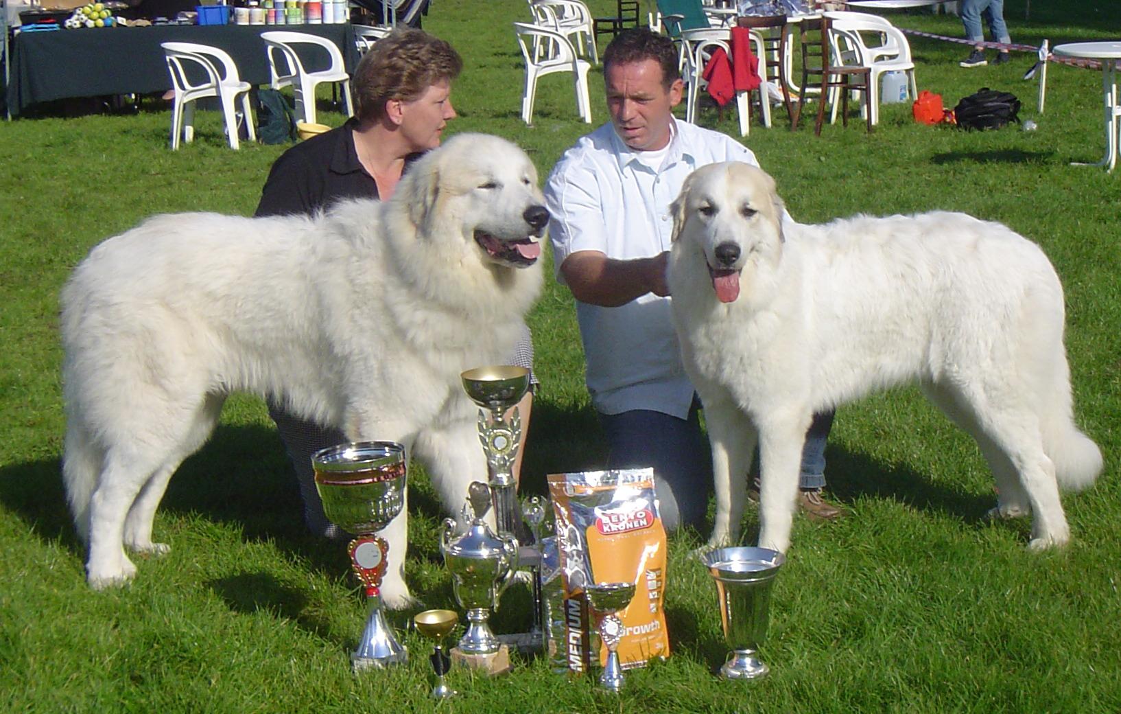 Beste Reu en Beste Teef Jonge Hondendag Belgie 2006