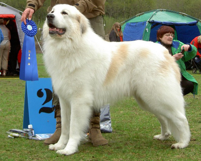 Cubelon's Hann-Hund Homage &quot;Martin&quot; 2e Best in Show