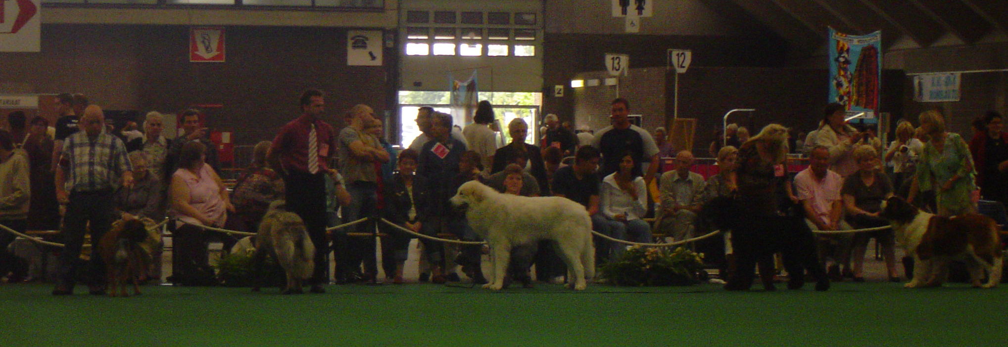 Mechelen, Belgium Selection Best Dog of FCI 2