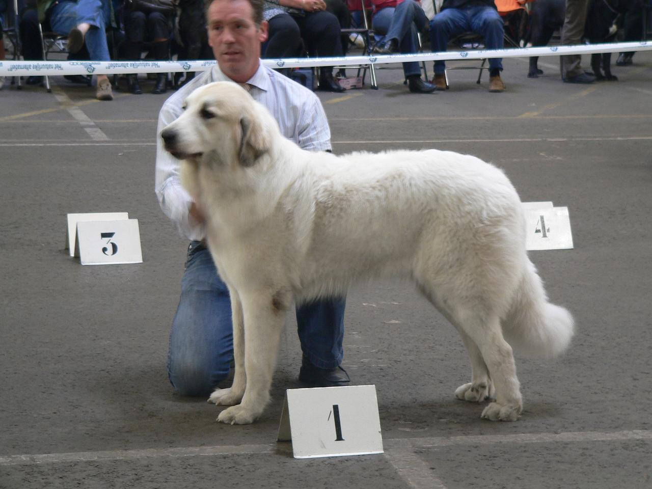 Bleiswijk 2006 Celice CAC CACIB BOB