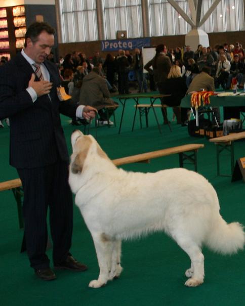 Een eenheid: baas en hond