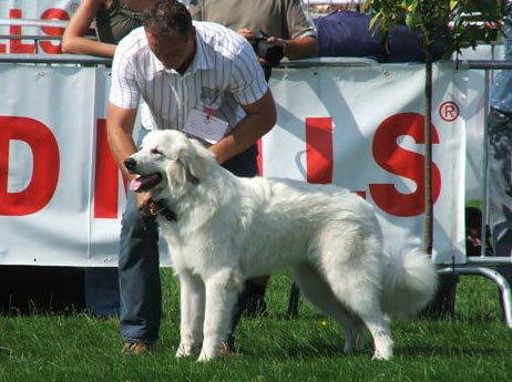 Caitlin 1 Puppyklasse, Beste Pup en geselecteerd bij 8 Beste Puppen in Show