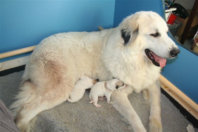 Lucy with her babies