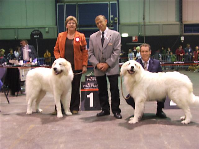 Beste Male and reserve Best Male Zwolle 2007